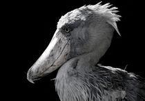 Schuhschnabel - Vogelportrait by triviart