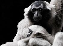 Gibbon mit Jungem by triviart