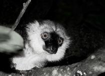 Lemur by triviart