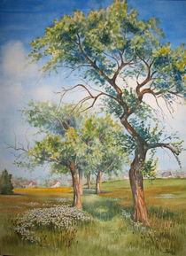 Alte Apfelbäume von Kerstin Birk