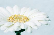 Blumenschale by triviart