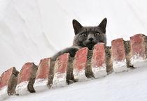 Auf der Mauer, auf der Lauer... by triviart