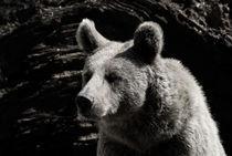 Bär by triviart