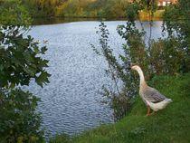 Naturlehrpfad  Blandorf Wichte by petra ristau