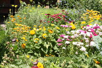 Blumenwiese  von petra ristau