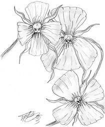 Blüten und Schädel by Andreas Willeitner