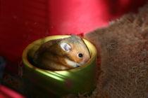 Gut gefüllter Futternapf - Hamsterkind by lizcollet