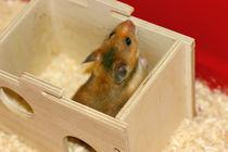 Hamster im Häuschen by lizcollet