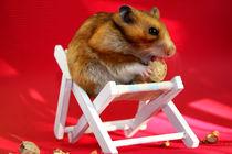 Urlaubsfreuden - Hamster im Liegestuhl mit Erdnuss by lizcollet
