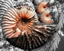 snail von Angela Parszyk