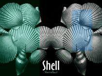 Shell in Art - Meeresgrund by Angela Parszyk
