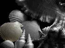 Shell in Art  by Angela Parszyk