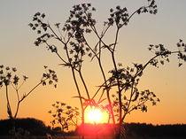 Sonnenuntergang 007 by Elke Schmidt