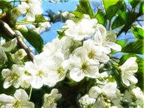 Kirschblüte by gunnarlasombra