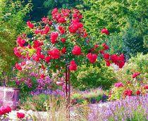 rosengarten by Uschy Baumgarten