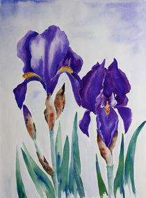 Iris by farbart