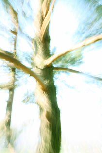 Dancing Tree von farbart