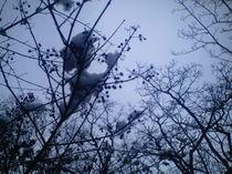 Fruchtzweige im Winter