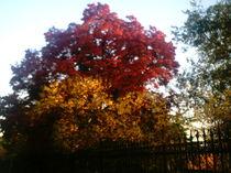 Ganz Roter und Orangener Herbstbaum