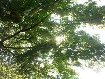 Laubzweige des Ahornbaumes im Sommerhimmel