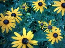 Gelbe Blumen mit dunkelgrünen Blättern