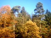 Ein idealer Herbsttag