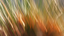 Herbst-Bunt by k-h.foerster _______                            port fO= lio