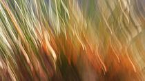 Herbst-Bunt von k-h.foerster _______                            port fO= lio