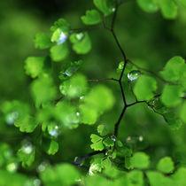 grün by Dagmar Bittner