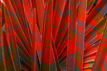 Superimposed leaves by Martine Affre Eisenlohr