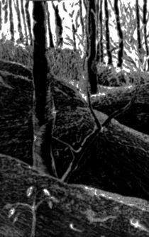 Wald by Silvia Martini