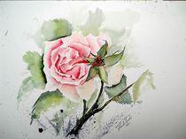 Rose von Theodor Fischer