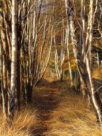 Herbstbirken von fotokunst