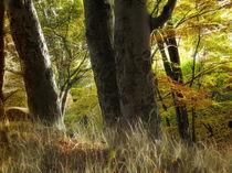 Herbstlicht von fotokunst