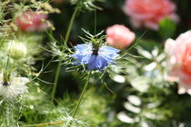 Blumenfreunde by Raingard Göbel
