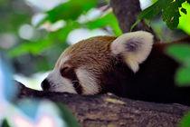 Schlafenszeit I (Katzenbär) von gnubier