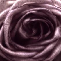 The Rose IV von gnubier
