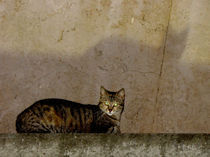 Katze von Monika Sturm