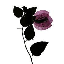 Blüte magenta durchleuchtet by Iris Kaschl