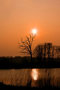 Baum am See von vhwdigitalart