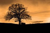 Winterbaum in Sepia von vhwdigitalart