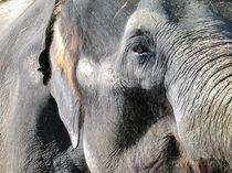 Elefant by Sizou BE