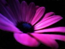 Blume in Lila von Walli Gutmann
