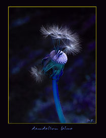 Dandelion Blue by Martina Rathgens