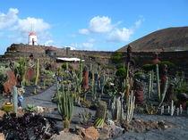 Jardin de Cactus by Alwin Mücher
