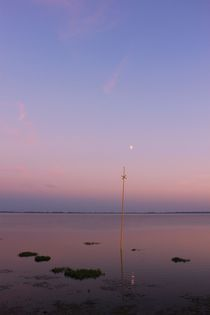 Moonlight by Michael Beilicke