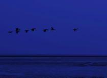Nachtflug von Michael Beilicke