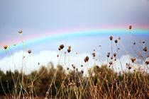 Regenbogen 216 von edler