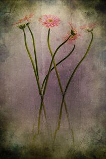 Dreaming of flowers by piri