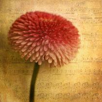 Sinfonia by piri